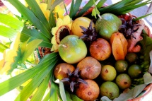 Guadeloupe matreise